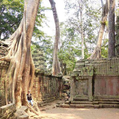 Le pays où les temples se font manger par la forêt
