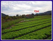 Pilat Plaisir