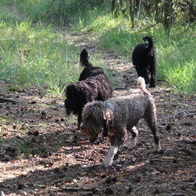 Wesenstest für Wasserhunde