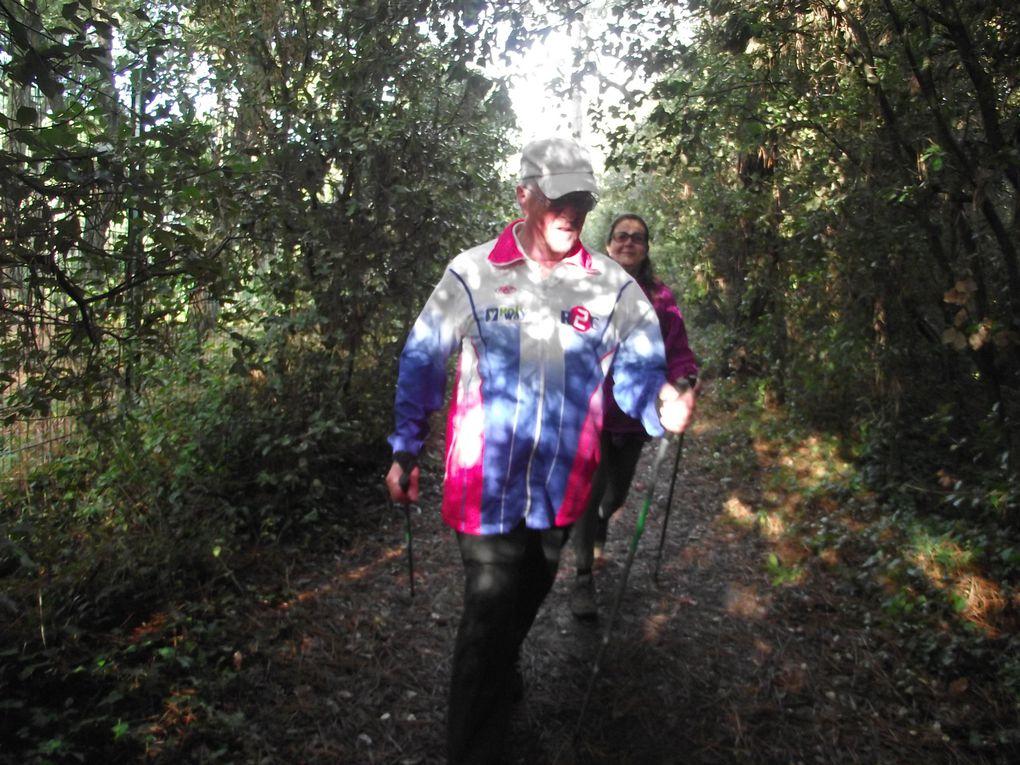 Séances de fractionnés dans la forêt d'Escoublac. Et travail de côtes