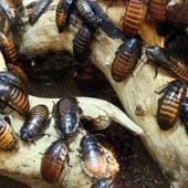 300 millions d'euros pour le spécialiste de l'élevage d'insectes ! - Insolentiae