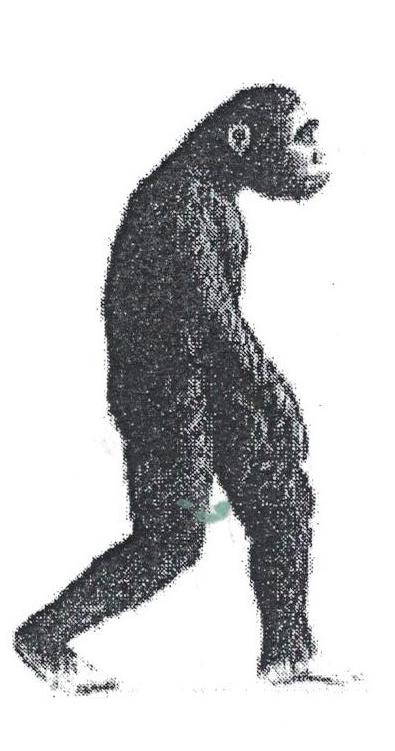 DARWIN EVOLUTION / PROJET APL   5e