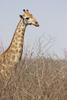 Loulou se fait l'Afrique du Sud