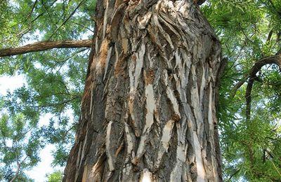 L'arbre de la vie et du mal