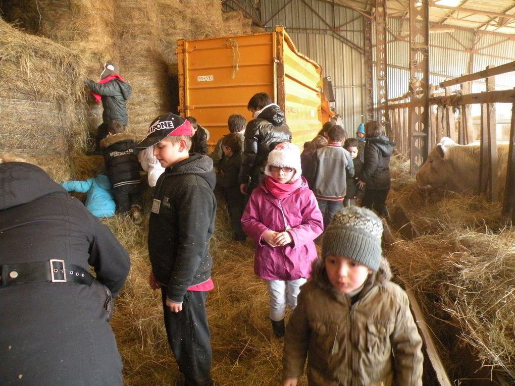 Cochons, chèvres, ânes, chevaux, dindons, cochons d'inde : Une journée ensoleillée où nous étions entourés d'animaux en liberté!