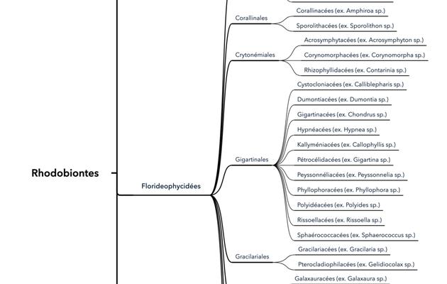 La classification des Rhodobiontes