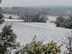 Champs de vignes enneigés