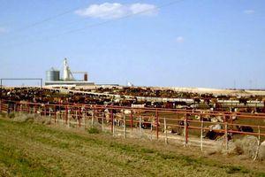 Trois multinationales de la viande émettent autant de gaz à effet de serre que la France !