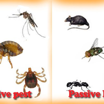 Annoying pests you can eliminate with pest control service