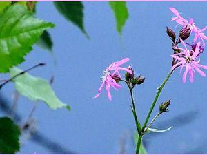 Quelques fleurs de printemps... - 8 photos