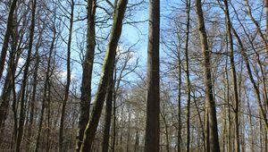 Reforest & life en forêt de Bercé