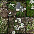 Trois petits tours au jardin