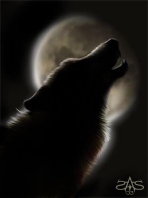 Chant d'une louve