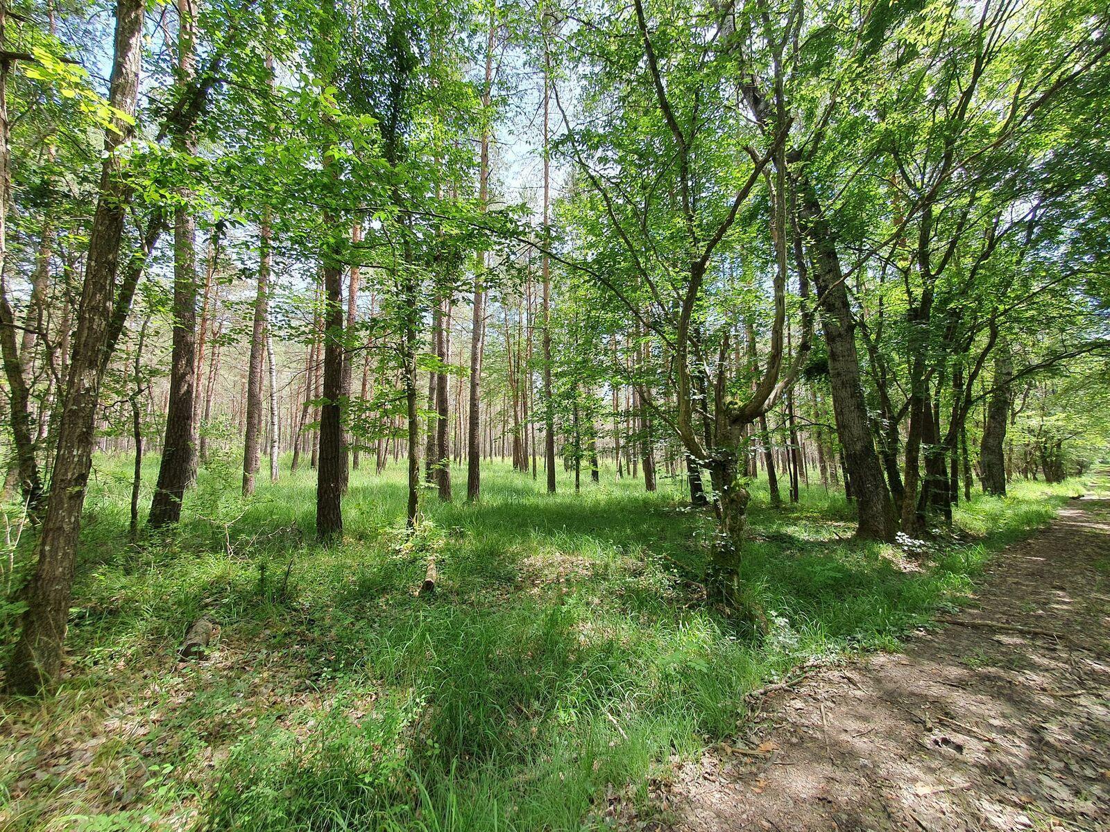 Bois du Défaut, à Brienne-le-Château