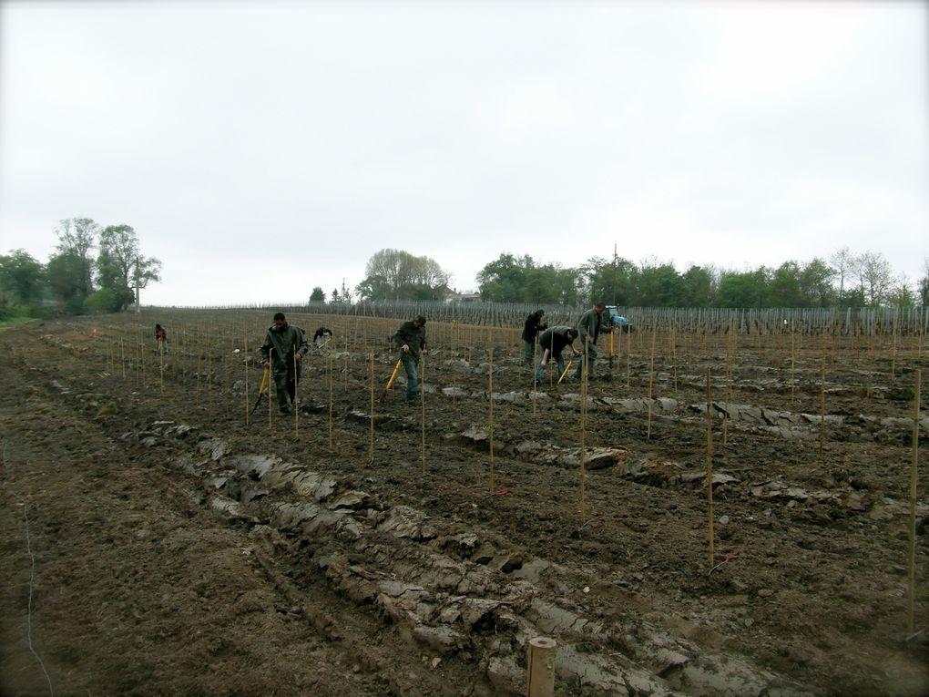 Plantation de Foligan - Le 27&28 Mars 2013 - Lieu dit Réole à Reignac, dans le Sud Charente et plantation de Colombard - Le 26 Avril 2013 - Lieu dit Garde à Rotard à Condéon dans le Sud Charente.