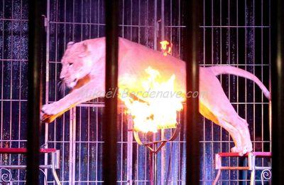 Cirque de St Pétersbourg 2014 à Toulouse