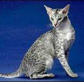 Le roi des chats - Les écrits d'isa