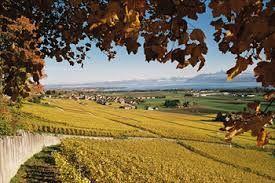 Le canton de Vaud et  la Vigne