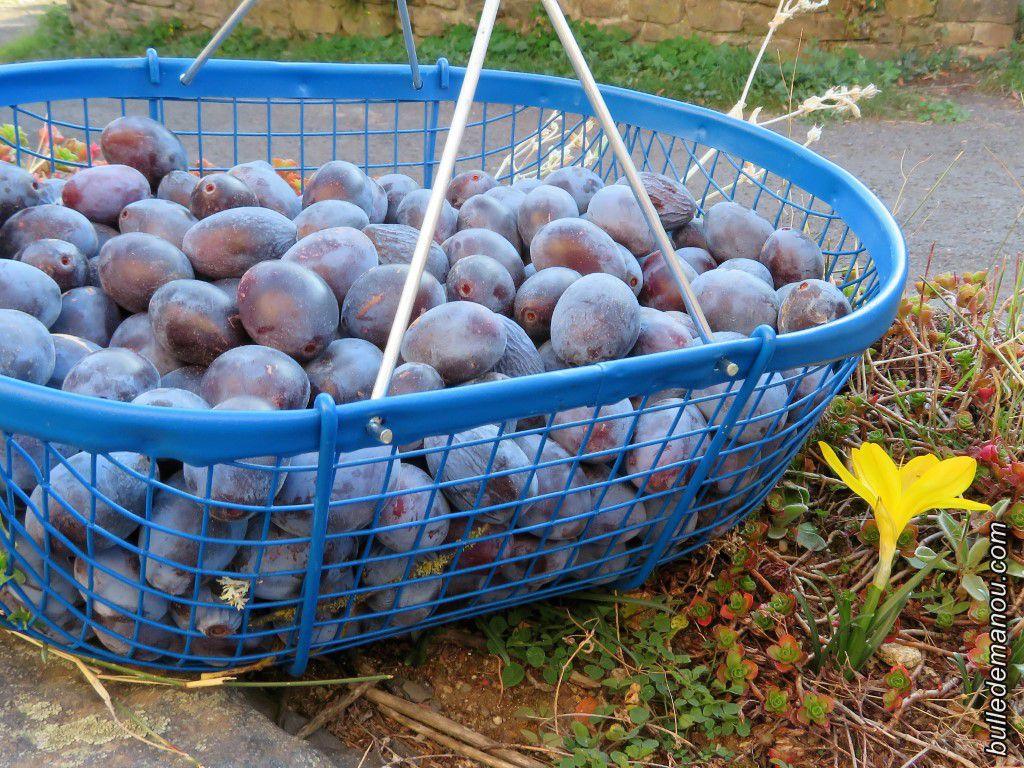 Que faire avec des prunes ?