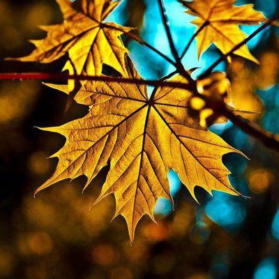 Une image ... une histoire: Feuilles d'automne.