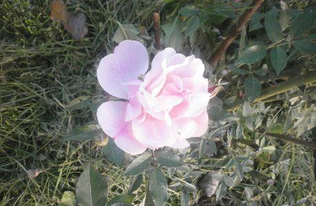 De la couleur dans le jardin...