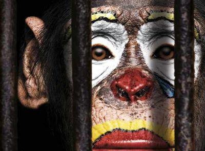 Motion pour interdire les cirques avec animaux non domestiques sur #Montgeron
