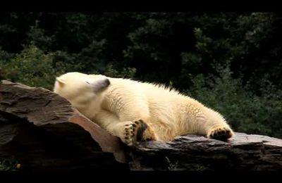 Tierpark 05.08.2012