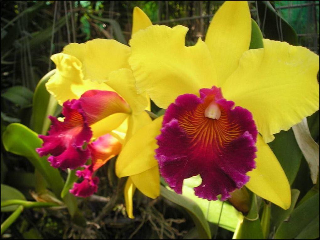 2 dernières photos sont celles des orchidées de Nantes (France). Les autres viennent d'un jardin du Thailand
