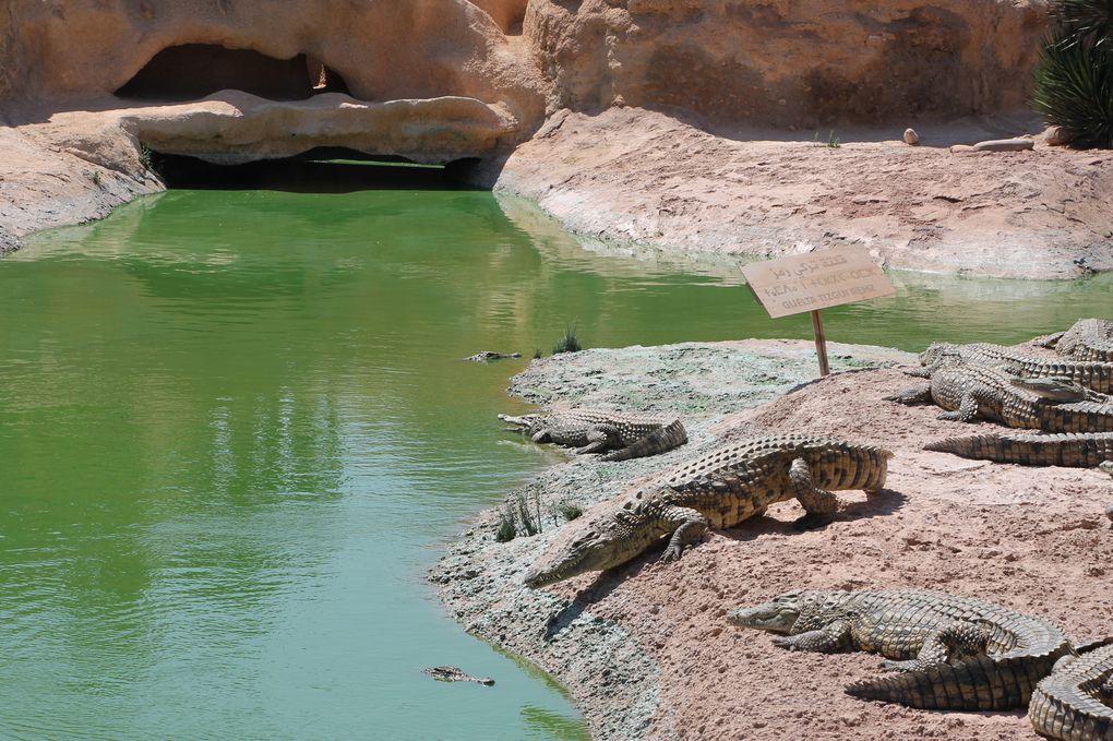 La plus grande attraction de ce parc, bien sur les crocodiles: Plus de 300 crocodiles du Nil, dont certains pensionnaires atteignent déjà plus de 3 mètres, évoluant libres dans un riche jardin botanique magnifiquement arboré et parfaitement sécurisé