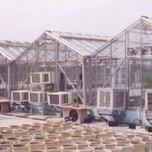 Are You Looking for a Greenhouse Supplier in India?