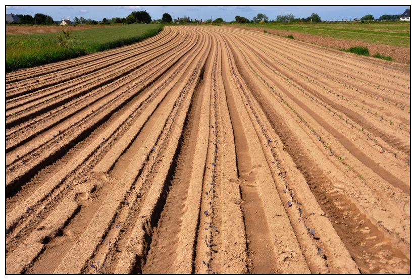 Album - Agriculture-3-