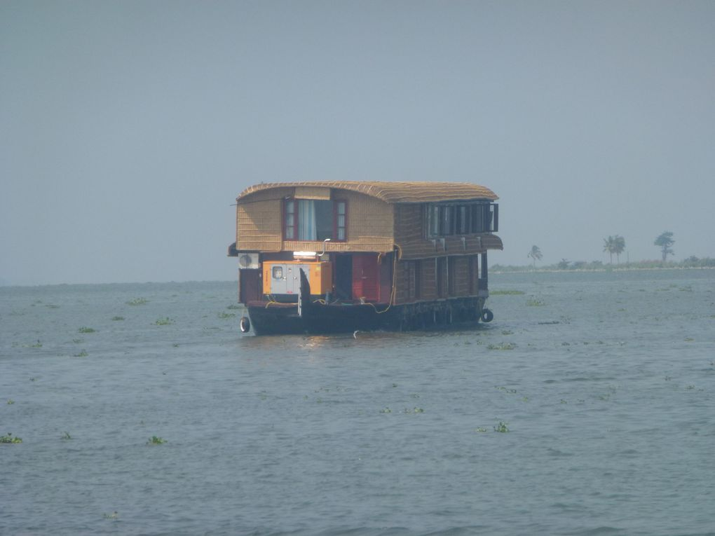 février 2012,  sur les lagons du Kérala, croisière sur les kétuvallams, les autres embarcations, la végétation