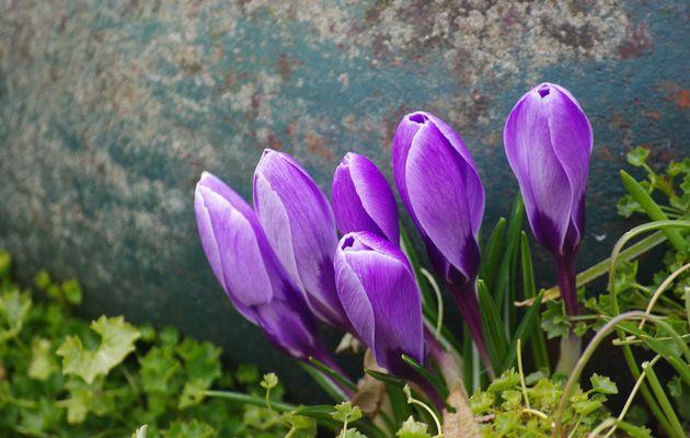 Les fleurs et sa dame, un poème de Federico Mennini