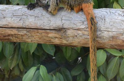 Des singes au zoo de La Teste...
