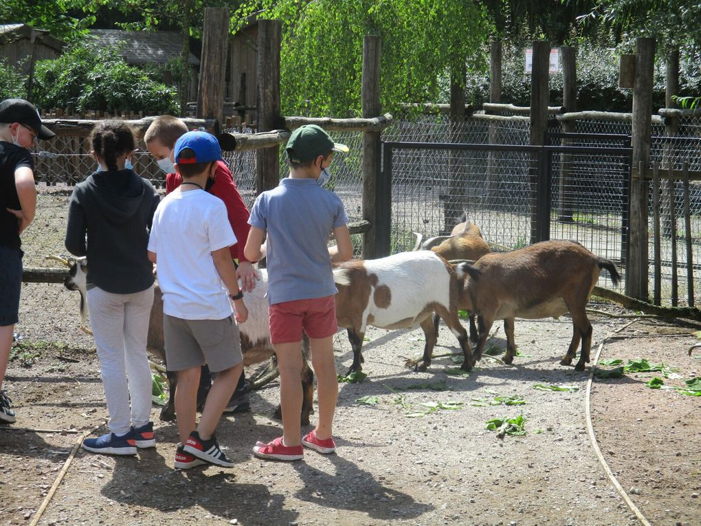 A la découverte des animaux du zoo de Bordeaux Pessac