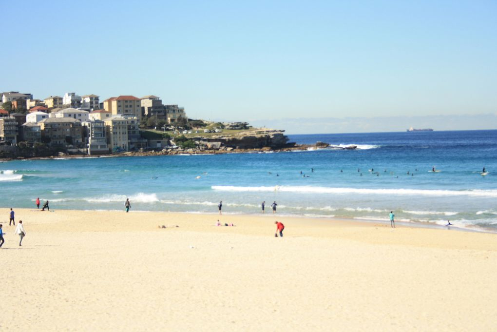 Harbour bridge, la City, La tour de Sydney, la plage de Bondi et vue de la tour sur la City