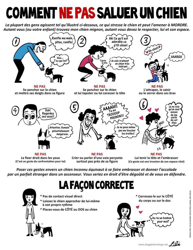 Attention aux chiens et attentions apportés aux chiens