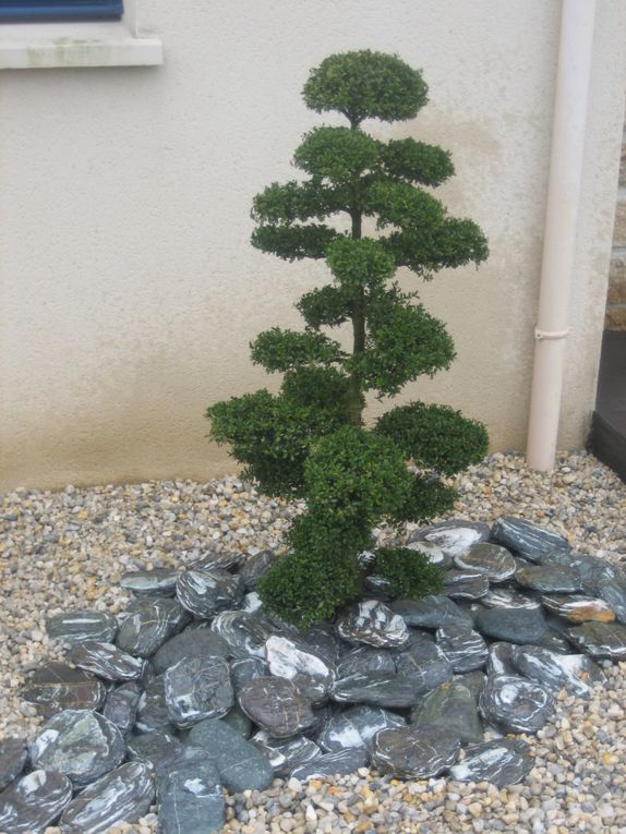 Arbor Minéral, paysagiste sur Vannes dans le golfe du morbihan (56) vous propose différentes espèces d'arbres nuages.