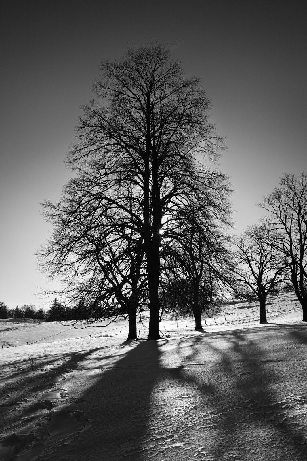 Le Larmont - Hiver - 49 - ©2021 Jean-Robert Longhi Photographie non libre de droits.