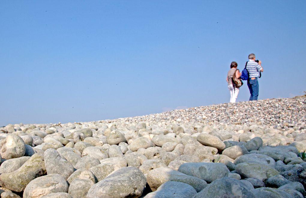 Photos réalisées à l'occasion du Festival de l'Oiseau 2011 en Baie de Somme