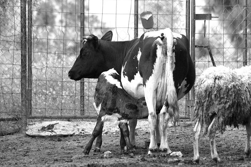 """Ferme agro écologique de Bouinane: """"Quand l'oasis est dans le pré..."""""""