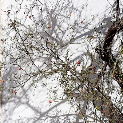 Nature ensoleillée de fin d'hiver