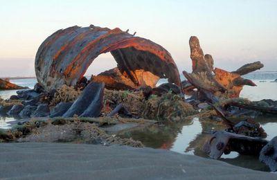 N° 2108 ) Au Touquet, les grandes marées dévoilent l'épave du « Socotra ».