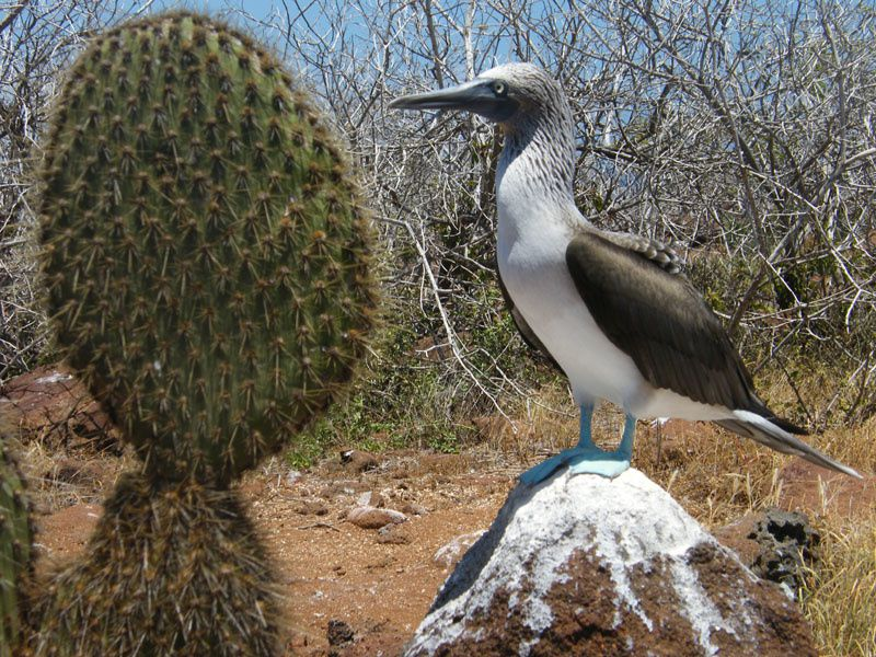 Photos et images des Galapagos.
