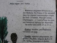 """Randonnée de la """"Côte-Ronde et des Percières"""" à Chatel-Guyon"""