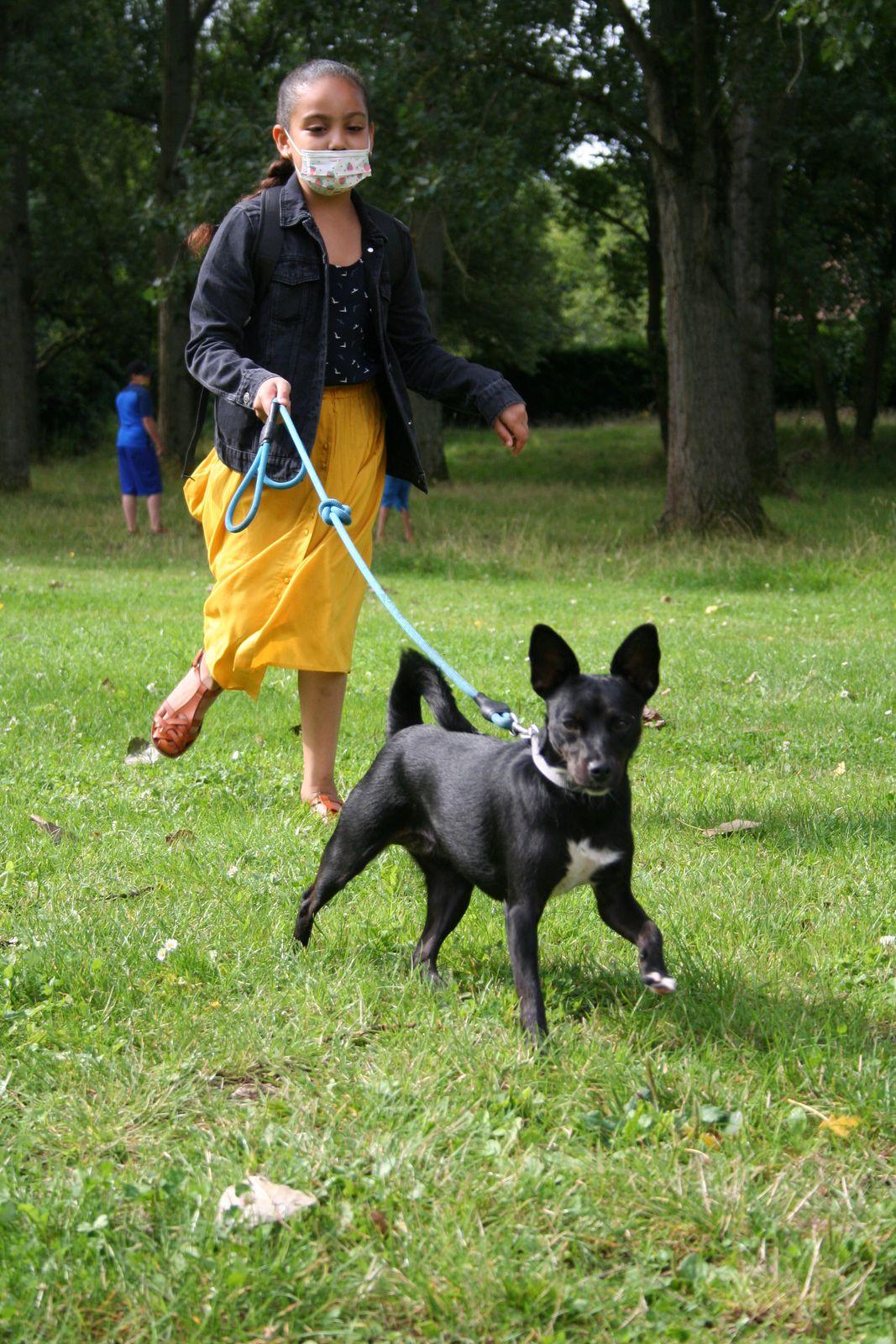 Lavoisier-Primaire-Dressage Canin