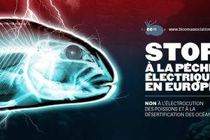 Le Parlement européen doit voter mardi sur la pêche électrique