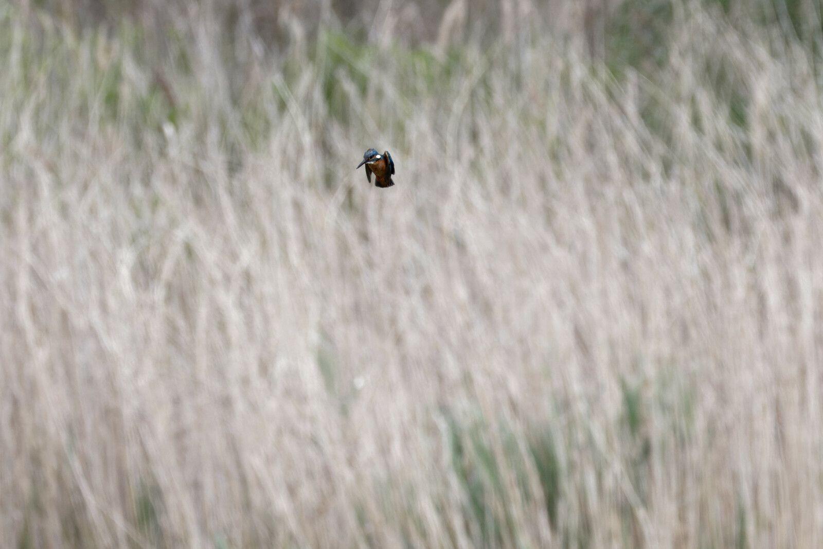 568 - La Biodiversité est un vrai trésor ! Punaise ! Abeille, Odonate, Barge, Passereau... : 22/05/2021