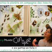 Canopée - La Galerie des Insectes | Office de Tourisme de Caen la Mer, Destination Normandie