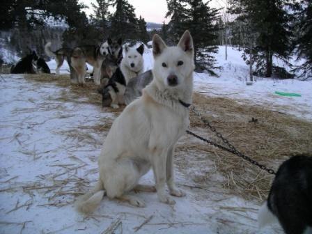 Notre expédition dans la nature sauvage du Yukon...